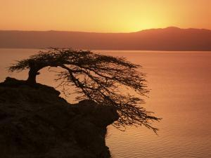 Acacia Tree Silhouetted Against Lake at Sunrise, Lake Langano, Ethiopia, Africa by D H Webster