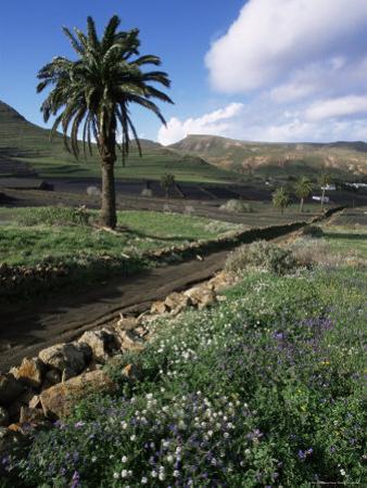 Countryside, Haria, Lanzarote, Canary Islands, Spain