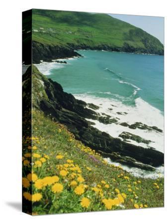 Irish Summer Colours, Dingle Peninsula, County Kerry, Munster, Republic of Ireland (Eire)