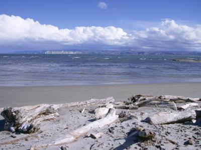 Large Amount of Driftwood on Beach, Haast, Westland, West Coast, South Island, New Zealand