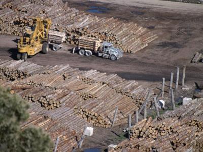 Logging Plant at Port, Gisborne, East Coast, North Island, New Zealand