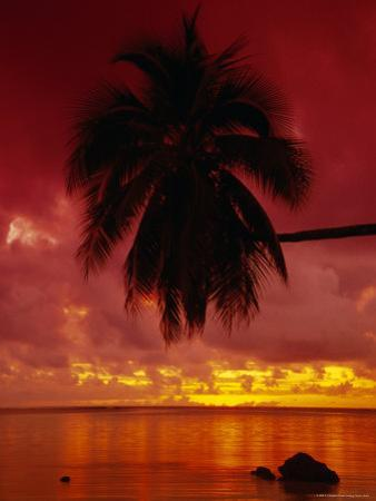 Silhouette of Overhanging Palm Tree, Colourful Sunset, Aitutaki, Cook Islands, Polynesia