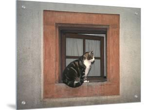 Cat Sitting on a Window Ledge by D.M.