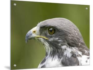 Close-Up of a Bird by D.M.