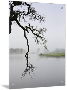 Foggy Landscape by D.M.