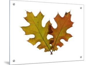 Two Leaves in Autumn Colors by D.M.