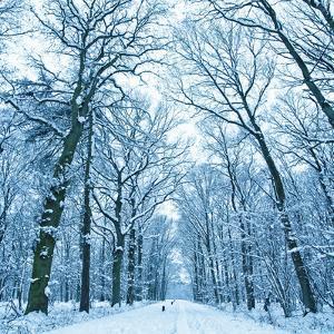 Last Snow by Dado Daniela