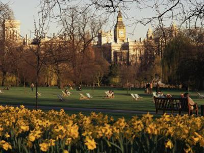 Daffodils in St. James's Park, with Big Ben Behind, London, England, United Kingdom by I Vanderharst