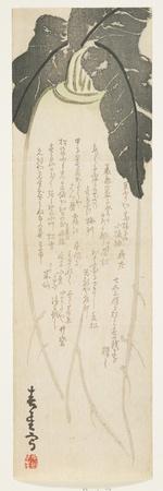 https://imgc.allpostersimages.com/img/posters/daikon-radish-january-1864_u-L-PUSQMF0.jpg?p=0