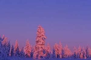 Scandinavia, Finland, Lapland, Saariselkä, Magical colours at sunset by Daisy Gilardini
