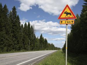 Road Sign for Elk Crossing, Highway Number 14, Punkaharju Ridge, Savonlinna by Dallas & John Heaton