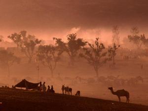 Camel and Camp at Camel Fair, Pushkar, Rajasthan, India by Dallas Stribley