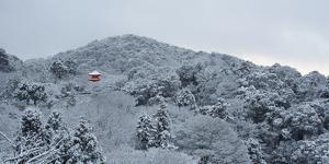 Frozen landscape in Kiyomizu-dera temple, Kyoto, Japan, Asia by Damien Douxchamps