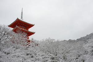 Kiyomizu-dera Temple's pagoda hiding behind snow-covered trees, UNESCO World Heritage Site, Kyoto, by Damien Douxchamps