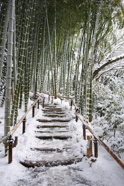 Snowy path in bamboo forest, Kodai-ji temple, Kyoto, Japan, Asia by Damien Douxchamps