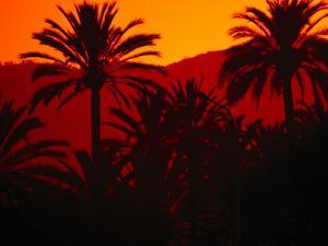 Palm Trees Silhouetted at Sunset, Palma De Mallorca, Spain by Damien Simonis