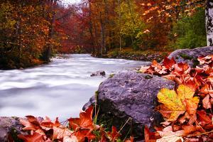 Autumn Flow by Dan Ballard