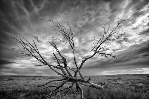 Colorado Storm by Dan Ballard