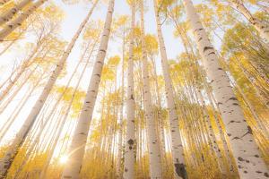 Colorado by Dan Ballard