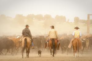 Cowboys Best Friend by Dan Ballard