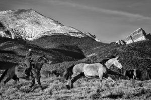 Roping the San Greys by Dan Ballard
