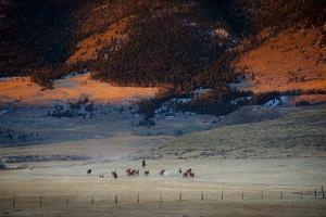 Rusher Ranch by Dan Ballard