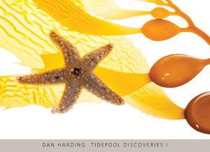 Tidepool Discoveries I by Dan Harding