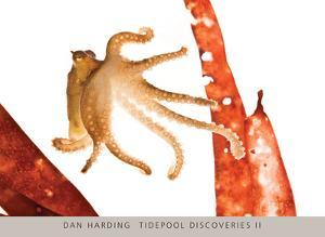 Tidepool Discoveries II by Dan Harding