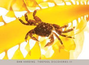 Tidepool Discoveries III by Dan Harding