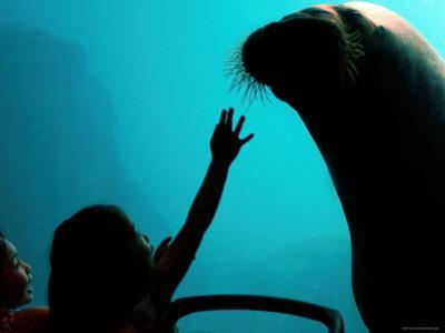 New York Aquarium, Coney Island, New York City, New York by Dan Herrick