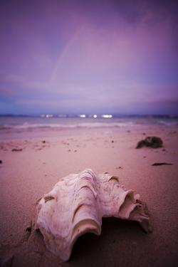 A Clam Shell Sits on a Beach While a Rainbow Appears on the Island of Mamutik, Borneo, Malaysia by Dan Holz