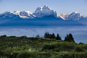 Dhaulagiri, an 8000 Meter Peak in the Morning Sun, Poon Hill, Annapurna Circuit, Ghorepani, Nepal by Dan Holz