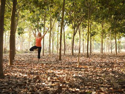Lisa Eaton Practices Tree Pose in a Rubber Tree Plantation -Chiang Dao, Thaialand