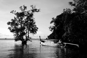 Tethered to a Mangrove Tree, a Long Tail Boat Floats Off Shore of East Railay Beach, Thailand by Dan Holz