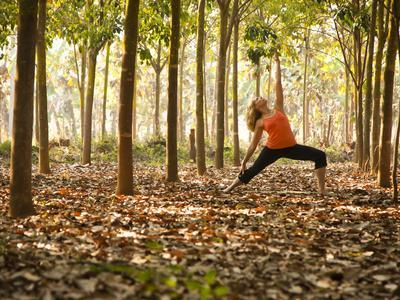 Yoga Practice Among a Rubber Tree Plantation in Chiang Dao, Thaialand