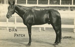 Dan Patch