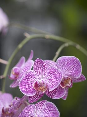 Rare, beautiful orchids bloom in a Florida garden by Dana Hoff