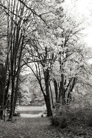 Baker Lake Trail I
