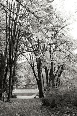 Baker Lake Trail I by Dana Styber