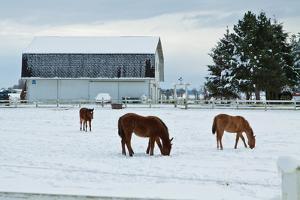 Grazing the Snow by Dana Styber