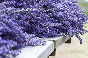 Lavender Harvest I by Dana Styber