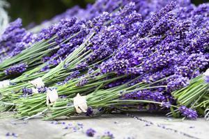 Lavender Harvest II by Dana Styber