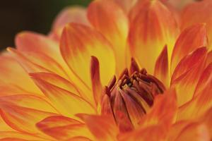 Orange Flame by Dana Styber
