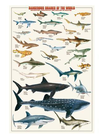 Dangerous Sharks