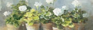 White Geraniums v2 by Danhui Nai