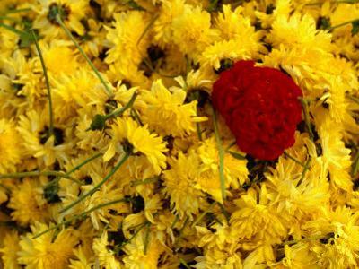 Basket of Marigold Flowers, Coimbatore, Tamil Nadu, India