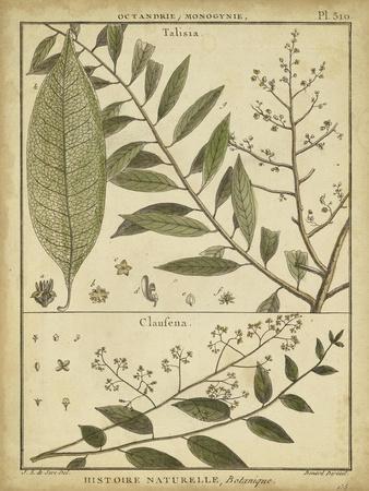 Diderot Antique Ferns I