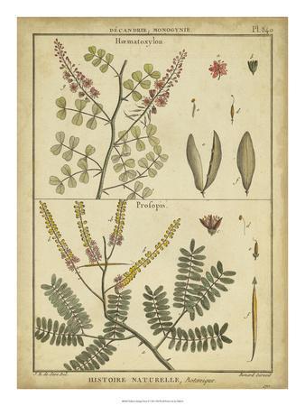 Diderot Antique Ferns II