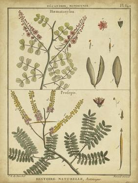 Diderot Antique Ferns II by Daniel Diderot