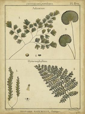 Diderot Antique Ferns IV by Daniel Diderot